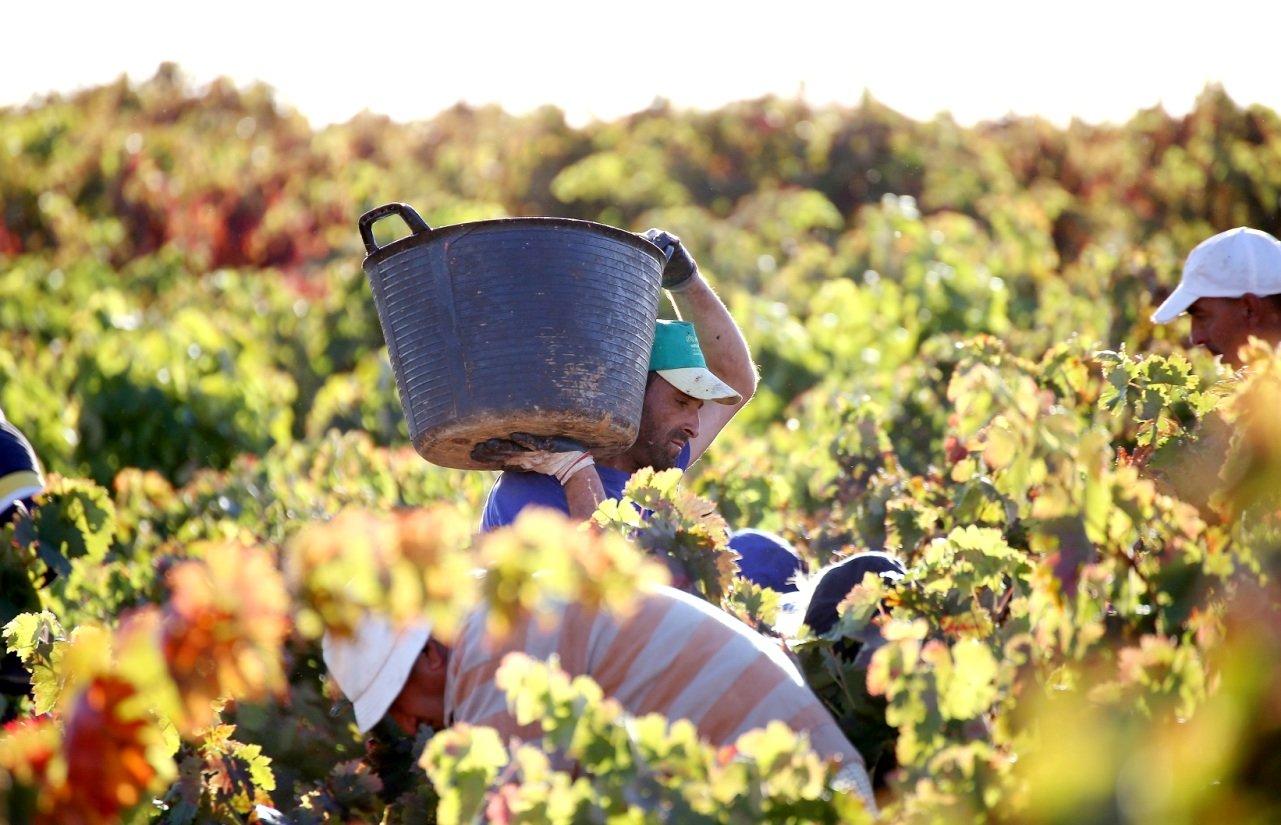 RDL: Medidas para el empleo agrario